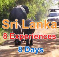 8 Wonderful Experiences in 8 Wonderful Days